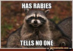 Has rabies / tells no one
