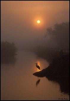 Water bird silhouette