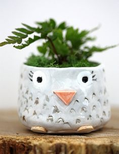 This would be great to hold seedlings or mother's day plants