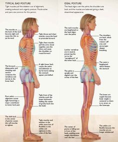 Strengthening of the core is the best way to improve your posture and correct (or prevent) back problems.
