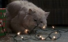 A white Angora cat has a very unmerry Christmas (Kitty Carnage Warning!) in National Lampoon's Christmas Vacation (1989).