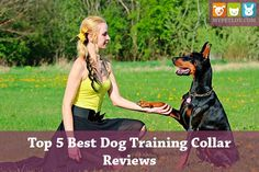Top 5 Best Dog Training Collar Reviews