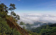 A cloudy forest scene in Ecuador