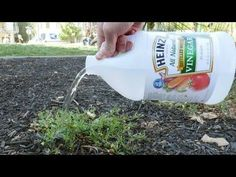 Put Vinegar On Your Plants And This Will Happen - YouTube