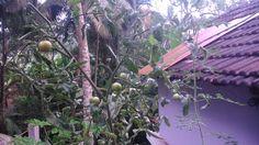 My Aquaponic Garden