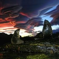 lenticular clouds and the seals who love them
