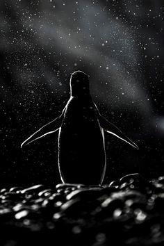 dia-concienciacion-pinguinos (9)