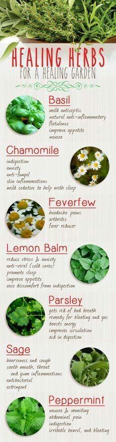 Healing herbs for a healing garden