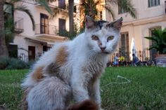 Feral cats in Spain photo series - http://travelling-cats.blogspot.be/2014/10/cats-from-sitges-spain.html