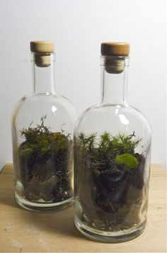 build terrariums within recycled ROOT and SNAP bottles. Learn how to create new environments for mosses, ferns, and other natural wonders gathered from otherwise neglected urban spaces.