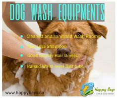 73 best dog and pet wash calgary images on pinterest animal check out our high end dog wash equipments bit1wxdilu solutioingenieria Choice Image