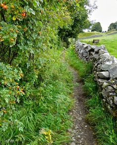 Inspiration for fall foliage for Death at an English Wedding, book 7 in the Murder on Location series. ~ Real location: Path leading to Eyam village - beautiful rosehips ready for picking and the skilful art of dry stone walling Country Walk, Country Life, Country Roads, Country Fences, Country Living, English Countryside, Derbyshire, Pathways, Beautiful Places