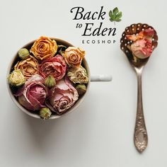 I'm very happy to announce the new Back To Eden Blog is up and running!  I'm happy that it's complete for so many reasons! First I can write articles again share valuable information and inspire people to be self healers. I'm also excited to now have more free time to make new natural products!  I've been simultaneously building the eco shop blog and directory. These Long hours by the computer were at times so difficult on me. Wishing Id be more outdoors and less sitting hunched for hours on…