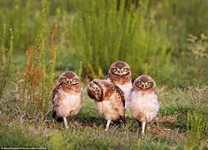 The Winners Of The Comedy Wildlife Photography Awards - I Can Has Cheezburger? - Funny Cats   Funny Pictures   Funny Cat Memes   GIF   Cat GIFs   Dogs   Animal Captions   LOLcats   Have Fun   Funny Memes