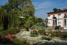 Palmengarten - Frankfurt, Germany....one of my favorite places in the city