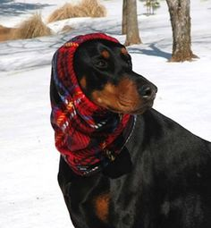 Red Plaid Polarfleece Snood for Dog  size Large by COZYHORSE