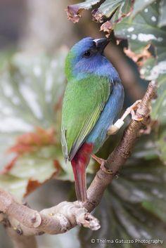 https://flic.kr/p/aPBVKp | Bird | Forbes Parrot Finch