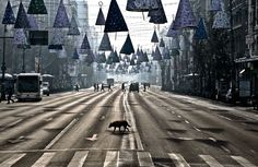 """""""A stray dog takes advantage of the low traffic to cross an almost deserted boulevard during a spell of sunshine in Bucharest, Romania, on December 26, 2012."""" (AP Photo/Vadim Ghirda)[Animals in the News - In Focus - The Atlantic]"""