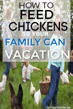 Types Of Chickens, Raising Backyard Chickens, Backyard Chicken Coops, Chicken Coop Plans, Keeping Chickens, Building A Chicken Coop, Diy Chicken Coop, Backyard Farming, Urban Chicken Coop