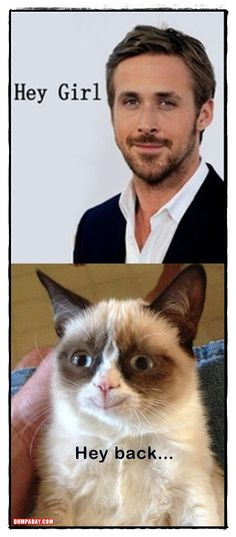 Grumpy cat and Ryan Gosling: love is in the air ♡ Hey girl! Hey back...
