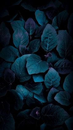 Foliage iPhone Wallpaper - iPhone Wallpapers
