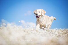 Alicja Zmyslowska Dog Photography | Flickr - Photo Sharing!