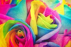 vivid color's roses