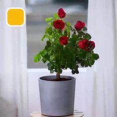 Greenhouse Gardening, Container Gardening, Gardening Tips, Garden Plants, Indoor Plants, House Plants, Terrace Garden, Herb Garden, Indoor Garden