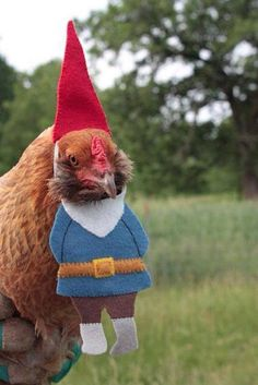 Halloween costume for chickens? This is strangely RAD!