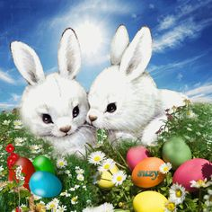 With Tenor, maker of GIF Keyboard, add popular Bunnies animated GIFs to your conversations. Share the best GIFs now >>> Happy Easter Gif, Happy Easter Quotes, Bunny Paws, Bunnies, Ostern Wallpaper, Holiday Gif, Good Night Greetings, Easter Greeting Cards, Easter Pictures