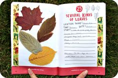Several Different Kinds of Leaves - The Pocket Scavenger by Keri Smith