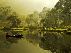 "The Yellow Dream.  ""Taken at Situ Gunung Sukabumi, West Java, Indonesia.  by Aprison Aprison."