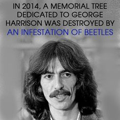 10 most ironic facts of all time will feed your dark sense of humor: In 2014, a memorial tree dedicated to George Harrison was destroyed by an infestation of beetles