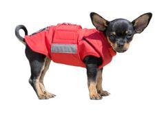 EXTRA WARM WINTER DOG COAT – Pepper Petwear Dog Winter Coat, Dog Raincoat, Dog Jacket, Dog Coats, Neck Warmer, Pets, Pepper, Animals, Jackets