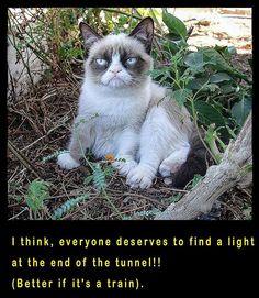Untitled Grumpy Cat, Cats, Instagram Posts, Animals, Gatos, Animales, Kitty Cats, Animaux, Animal Memes