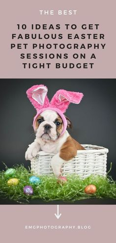 Easter is approaching and every pet photographer is in need of fresh ideas on how to shoot original pictures of our beloved pets. These 10 ideas will help you get rid of pet photography in Easter sessions! Pet Photography Tips, Photography Website, Photography Business, Animal Photography, Inspiring Photography, Religious Photos, Pet Photographer, Season Colors, Blogging For Beginners