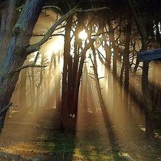 Stunning trees, ligh