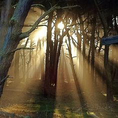 Stunning trees, lighting and nature. Worth a walk.  Presidio of San Francisco in San Francisco, CA