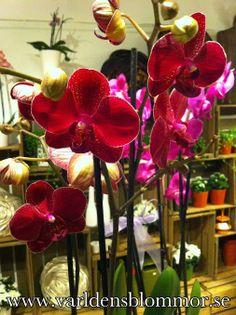 www.varldensblommor.se Landskronas blomsterbutik Världens Blommor ligger mitt i city Norra Långgatan 16 0418651159