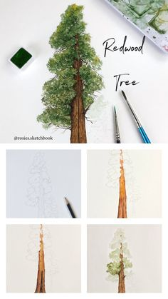 Mini redwood tree tutorial with step by step process photos. Watercolor Painting Techniques, Watercolour Tutorials, Painting Lessons, Watercolour Painting, Art Lessons, Painting & Drawing, Artist Painting, Watercolors, Painting Trees