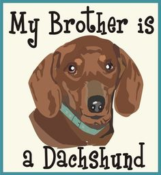 My Brother is a Dachshund Bodysuit or Tee on Etsy, $11.00