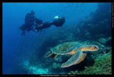 Reef Mappers: Visually Documenting Coral Reefs, Before They're Gone