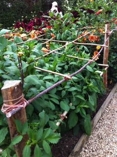 hold up your dahlias perfect for cutting garden seen at sarah raven perch hill