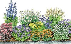 Garten ideen To replant: A flowering mattress of snail-resistant perennials Cheer Up Your Window Thi Perennials Fabric, Full Sun Perennials, Best Perennials, Shade Perennials, Flowers Perennials, Planting Flowers, Fall Plants, Cactus Plants, Raised Flower Beds