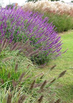En el jardin: Las Liebres y sus gramíneas