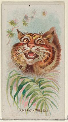 Allen & Ginter (American). American Wild Cat, from the Wild Animals of the World series (N25) for Allen & Ginter Cigarettes, 1888. The Metropolitan Museum of Art, New York. The Jefferson R. Burdick Collection, Gift of Jefferson R. Burdick (Burdick 201, N25.3) #cats