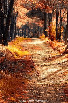 Athens Autumn in Ilion Woods
