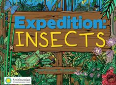 Expedition Insects | Smithsonian Science