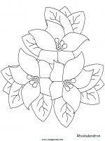 disegni_da_colorare_natura/fiore_fiori/fiori_73.JPG