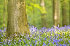 forest of dean flowers | Recent Photos The Commons Getty Collection Galleries World Map App ...